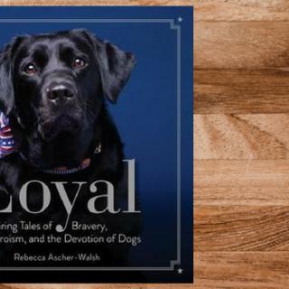 Blog Tour: Loyal by Rebecca Ascher-Walsh